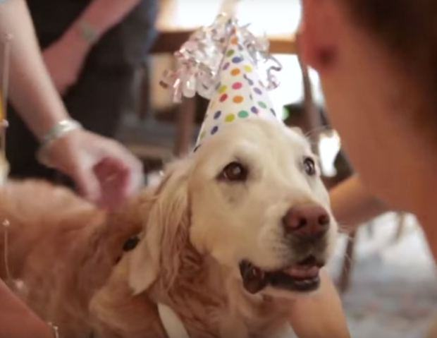 UNILAD dog911 117 Last Surviving 9/11 Rescue Dog Has Awesome 16th Birthday