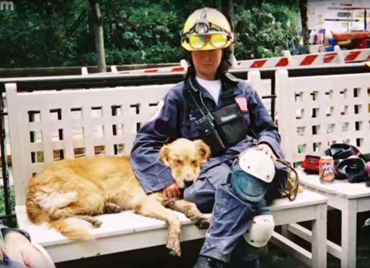 UNILAD dog9117 Last Surviving 9/11 Rescue Dog Has Awesome 16th Birthday