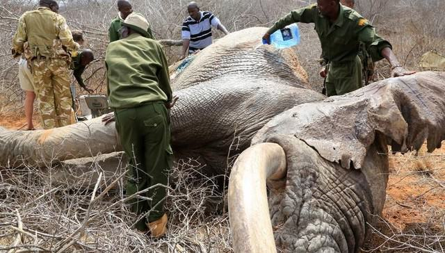 UNILAD ele3 Elephants Wounded By Poison Arrows Seek Out Humans To Save Their Lives