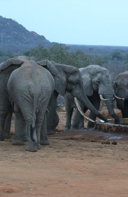 UNILAD ele33 Elephants Wounded By Poison Arrows Seek Out Humans To Save Their Lives