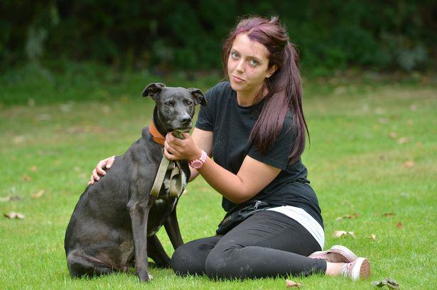 Britains Most Unloved Dog Gets Overwhelming Amount Of Offers For New Home UNILAD maggie dog 14