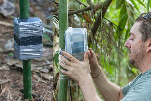 UNILAD rainforest animals 102 Guy Sets Up Camera Trap In Amazon Jungle And Snaps Rare Animals