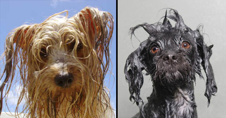 Heres The Science Behind Why Dogs Smell So Bad When Wet UNILAD wet dog 26