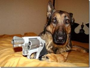 UNILAD Dog with Gun 300x22671495