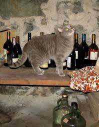 UNILAD cat roo36238 Cat Gets Pissed On Wine, Has Three Day Hangover