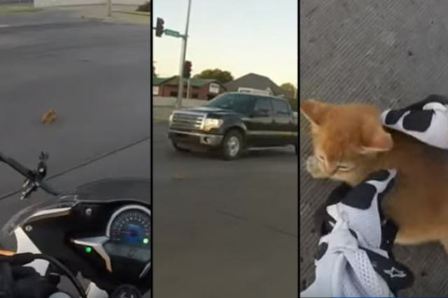 UNILAD featkitten85228 640x426 Daring Motorcyclist Rescues Kitten At A Busy Intersection
