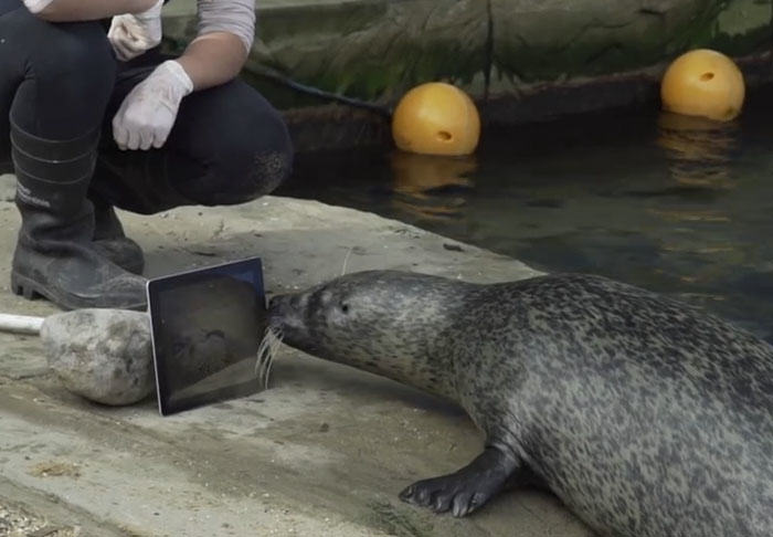 UNILAD seal334058 Seals Use FaceTime  To Maintain Long Distance Relationship