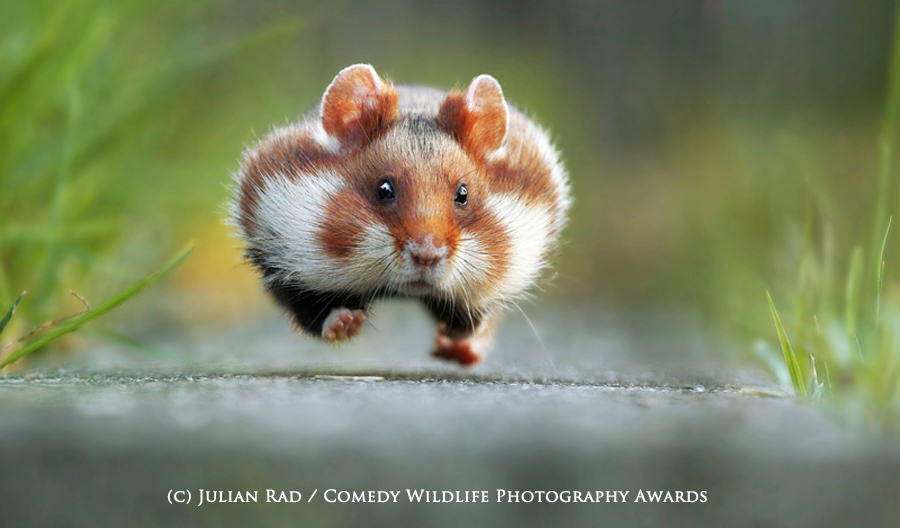 wildlife awards 1 The Winners Of The 2015 Comedy Wildlife Photography Awards Have Been Revealed