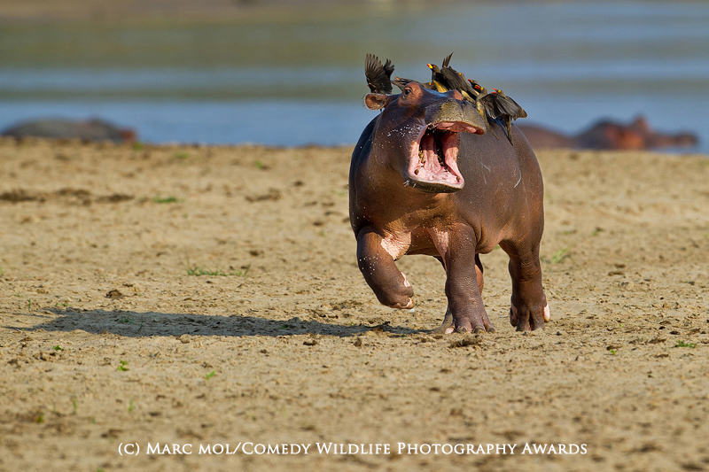 wildlife awards 8 The Winners Of The 2015 Comedy Wildlife Photography Awards Have Been Revealed