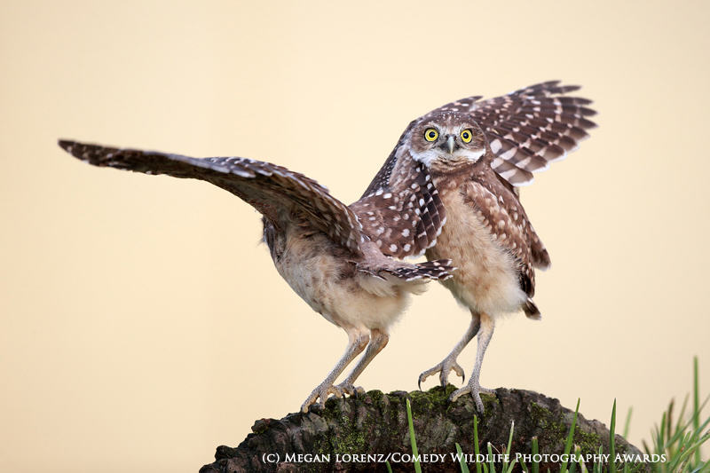 wildlife awards 9 The Winners Of The 2015 Comedy Wildlife Photography Awards Have Been Revealed