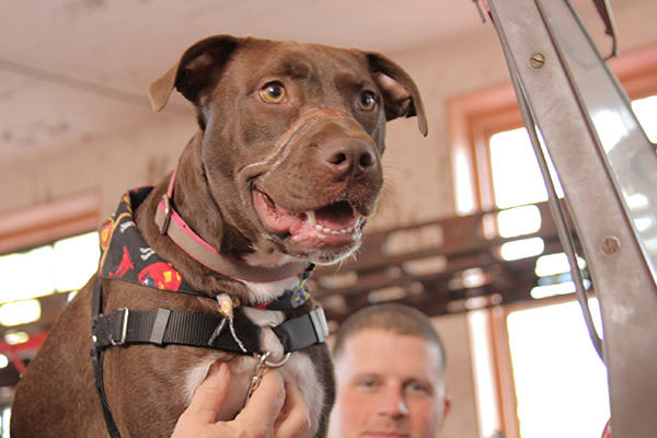 Caitlyn The Abused Dogs Amazing Day Following Recovery image