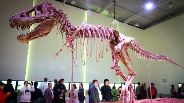 nick cage fossil 2 Nicholas Cage Returns Stolen Dinosaur Skull To Mongolia