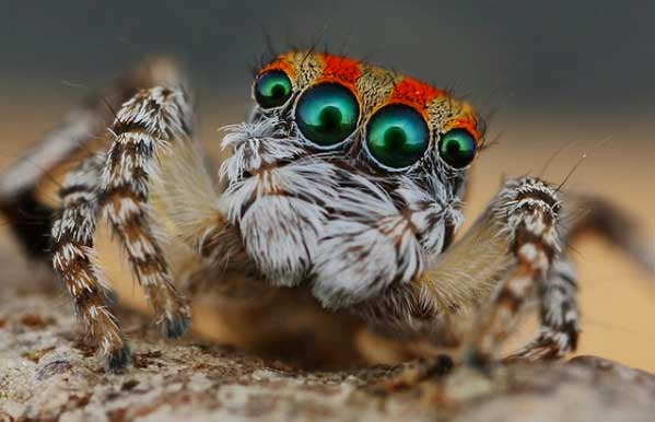 spider44 These Weird Animals Were All Discovered This Year