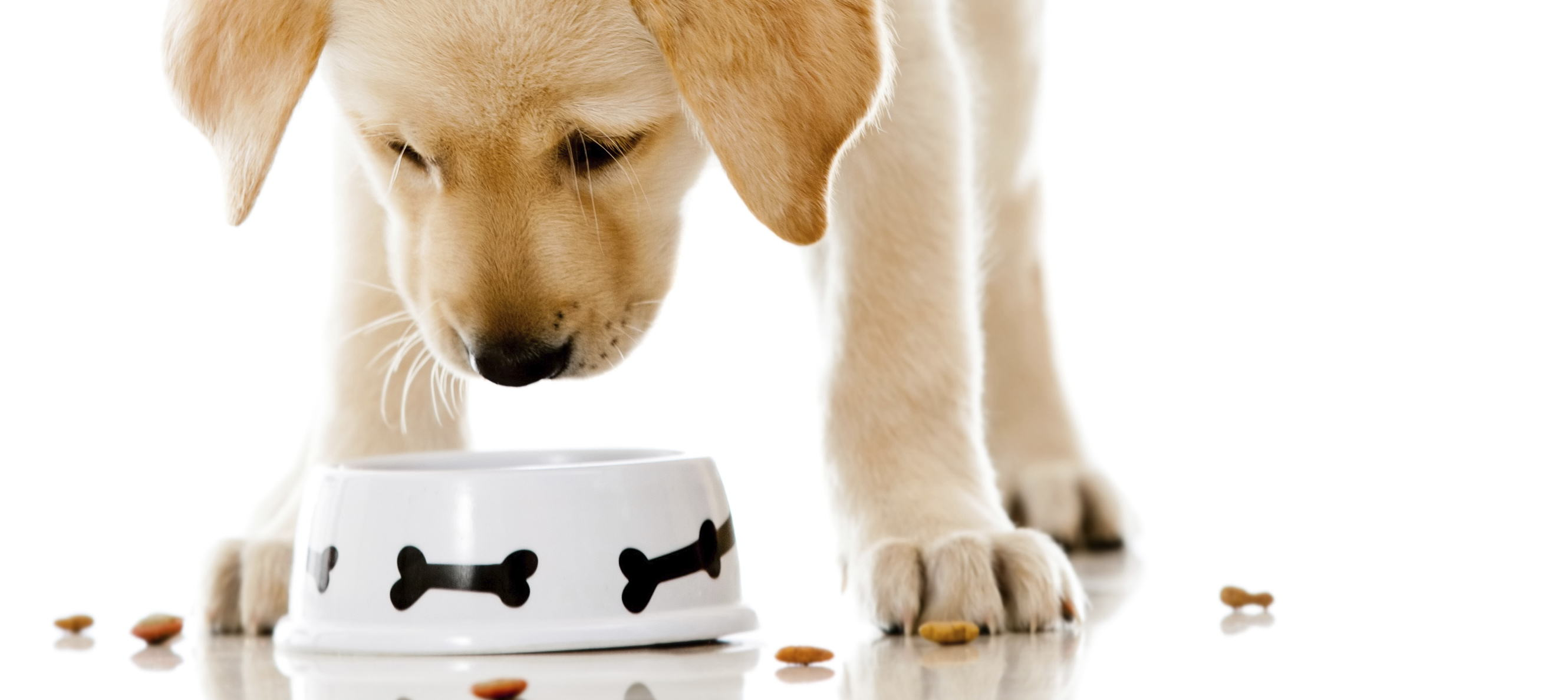 Dog food pedia Meals On Wheels Charity Apologises For Accidentally Serving Seniors Dog Food