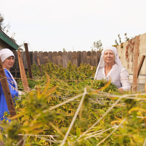 Screen Shot 2016 01 28 at 13.12.59 These Cannabis Growing Nuns Are Trying To Legalise Weed
