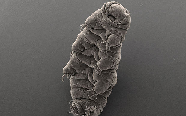Tardigrade 3550854b 2 Animal Brought Back To Life After Being Frozen For 30 Years