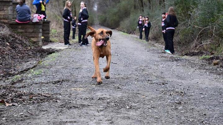 Dog Accidentally Runs Half Marathon, Finishes Seventh doggy1