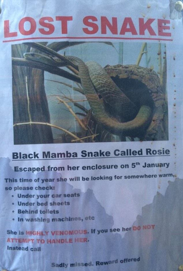 snake 1 Deadly Black Mamba Snake On The Loose In The UK