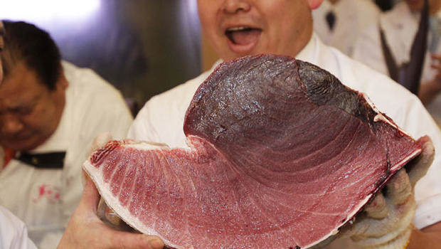 tuna3 It Turns Out Endangered Bluefin Tuna Goes For A F*cking Ridiculous Price
