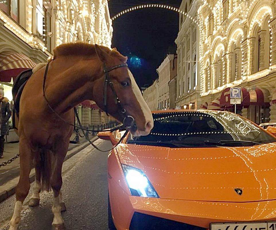 3173989C00000578 0 This bizarre photograph shows a horse next to a Lamborghini at a a 141 1456161829666 962x800