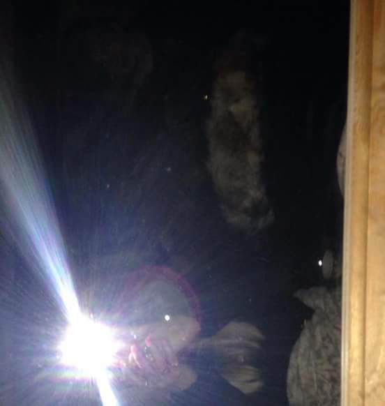 Britains Most Haunted House For Sale After Owner Traumatised By Demonic Goat Selfie ghost