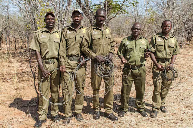 VFAPU scouts with some of the wire snares they have removed. Its Been A Great Year For This Anti Poaching Unit