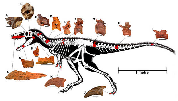 This Newly Discovered Dinosaur Gives Us Insight Into Origins Of T Rex dino2