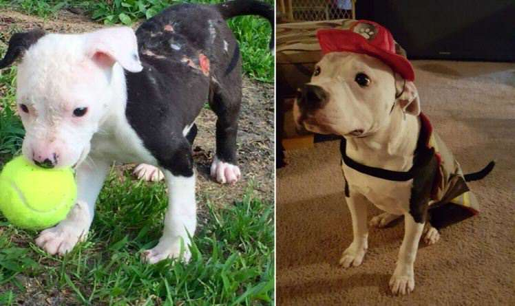 jake Puppy Rescued From Fire Grows Up To Become A Firefighter