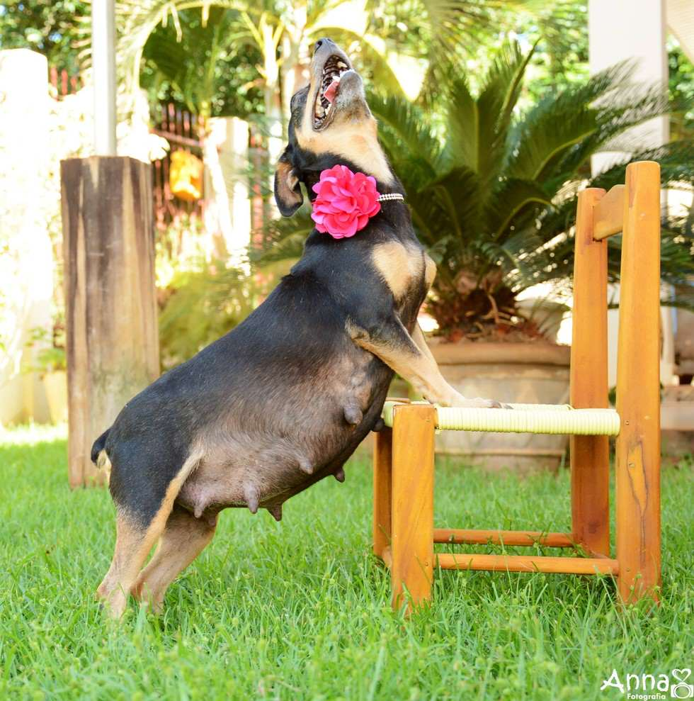 lil2 Pregnant Dog Is Totally Working It In This Photoshoot