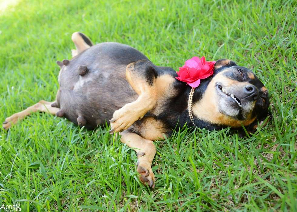 lil4 Pregnant Dog Is Totally Working It In This Photoshoot