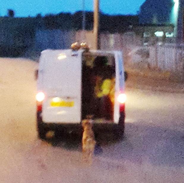 rspca2 Do You Know These Absolute Bastards Who Dragged A Dog Behind A Van?