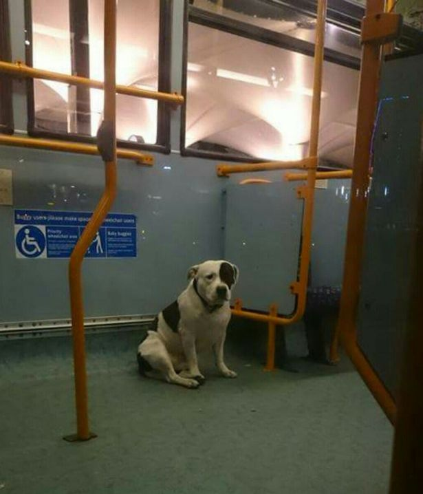 Abandoned dog 1 Can You Help Reunite This Dog Left On Bus With Owner