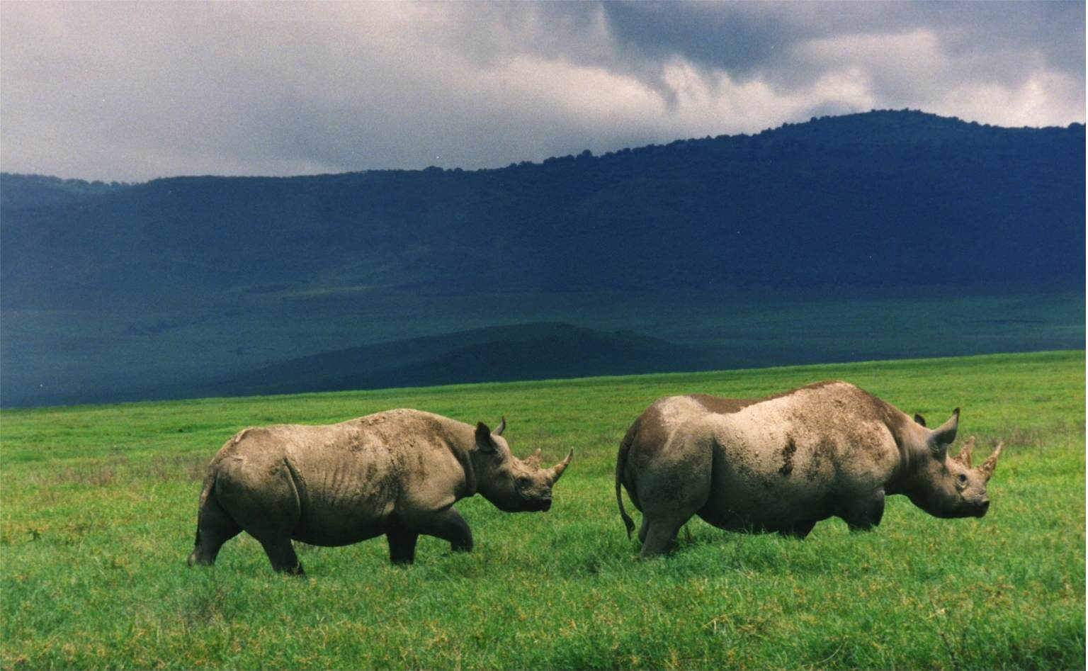 rhino2 Theres An Amazing New Plan To Save Rhinos From Extinction