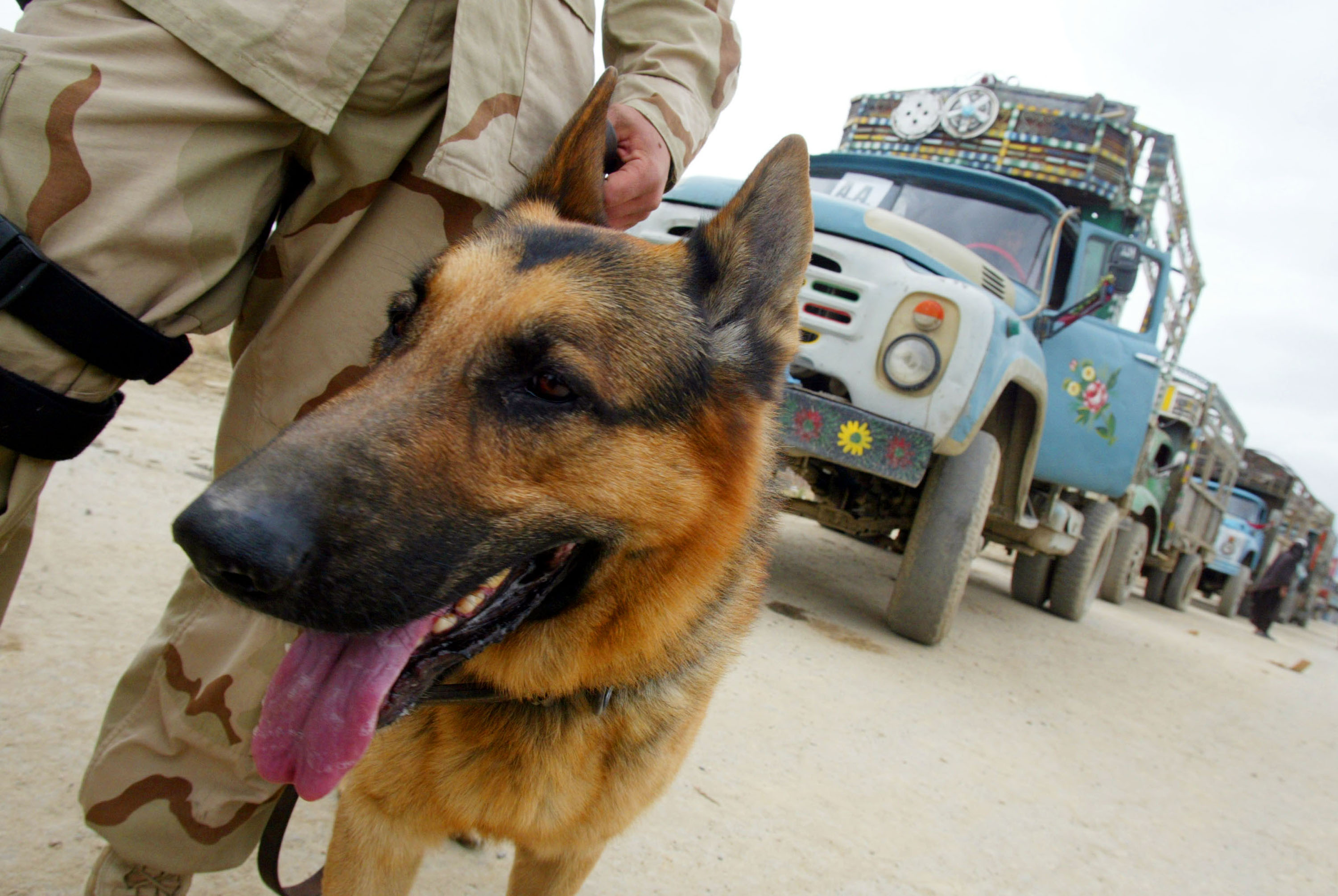 Hero German Shepherd Saves Entire SAS Crew From ISIS Ambush GettyImages 706647