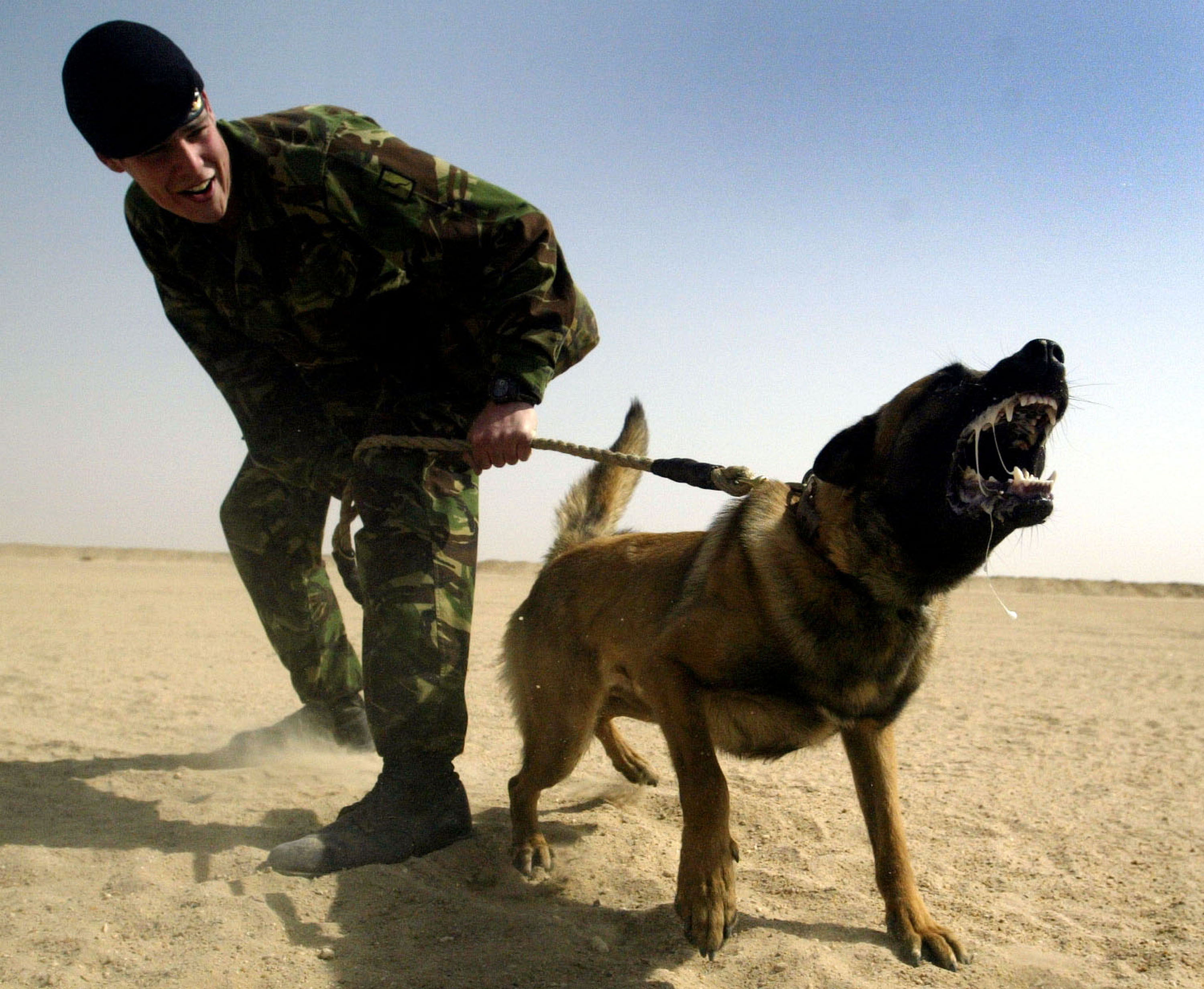 Hero German Shepherd Saves Entire SAS Crew From ISIS Ambush GettyImages 72538998