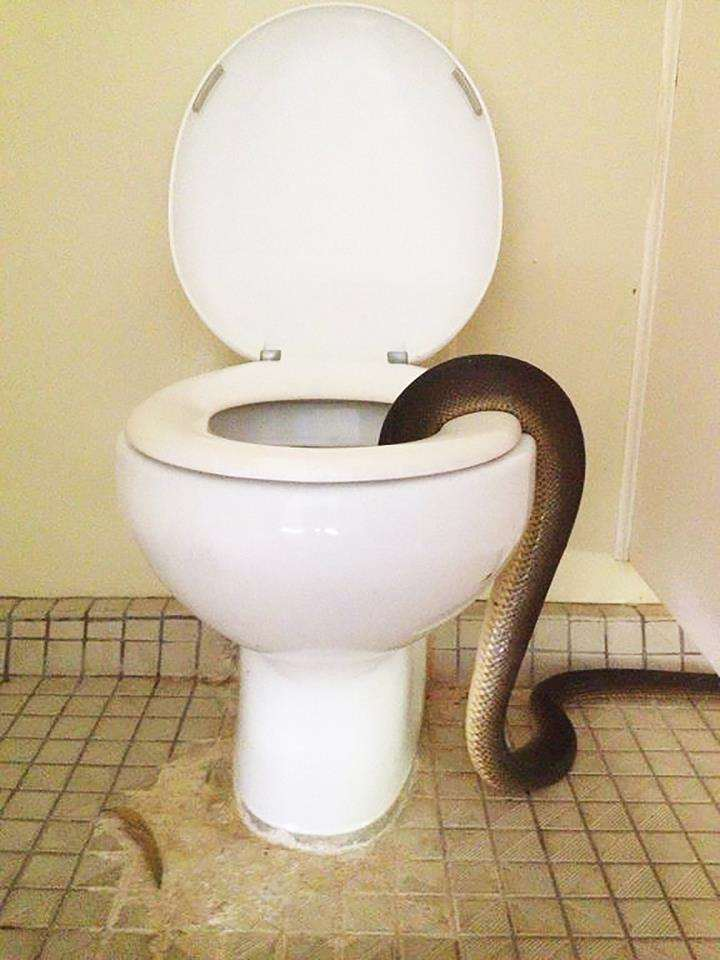 snake1 1 NOPE: These Photos Will Put You Off Using Toilet Forever