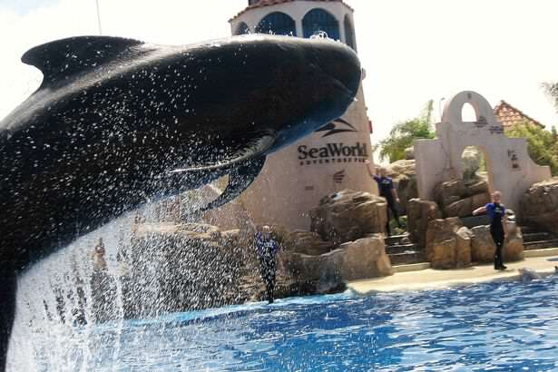 Bubbles Seaworlds pilot whale Death of Bubbles The Whale At SeaWorld Sparks Outrage Online