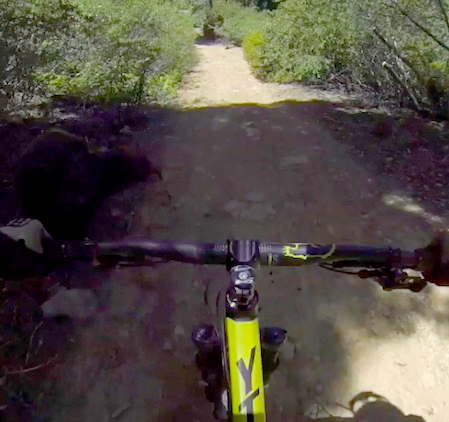bearbike2 Brutal Head Cam Footage Captures Moment Cyclist Crashes Into Bear