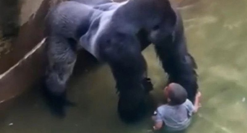 gor fb 1 Emotional 911 Call From Mother Whose Son Fell In Gorilla Cage Released