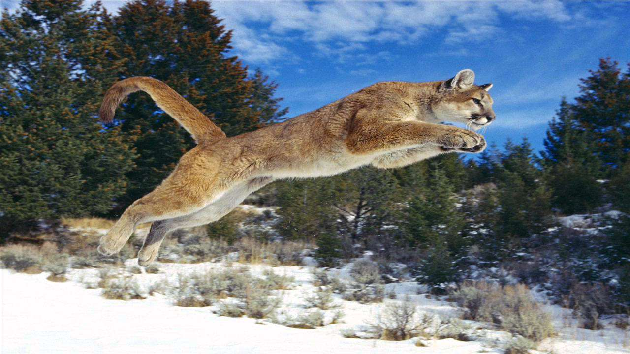 maxresdefault 1 9 Mum Rescues Five Year Old Son From Jaws Of Mountain Lion