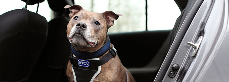 DogsHotCars Can You Really Smash A Car Window To Rescue A Dog?