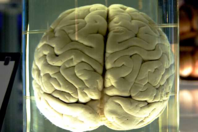 Chimp Brain in a jar 640x426 BREAKING: Were Living In A Computer Controlled By Evil Scientist