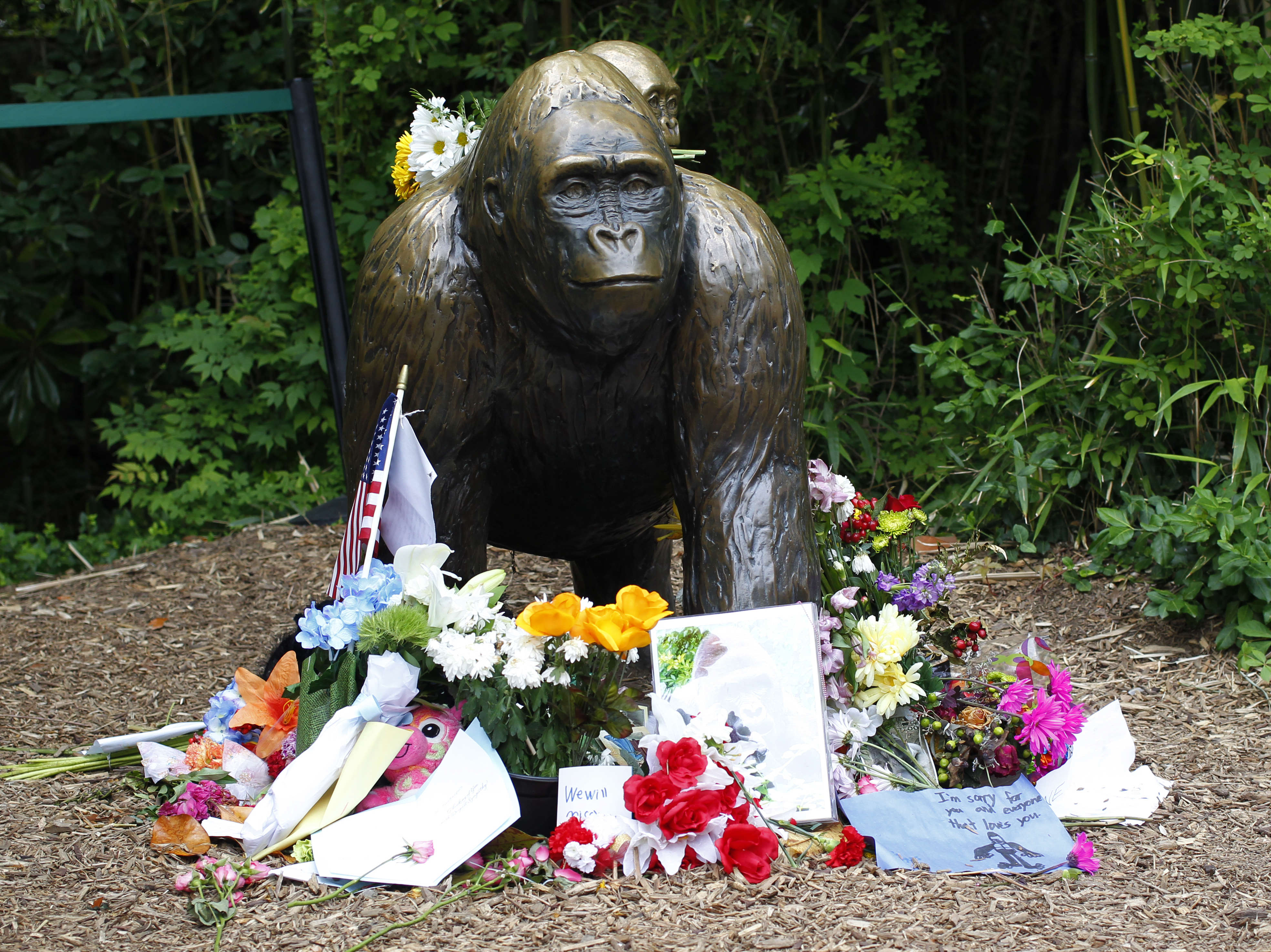 GettyImages 537652410 Pharma Douche Martin Shkreli Plans To Resurrect Harambe, Internet Goes Mad