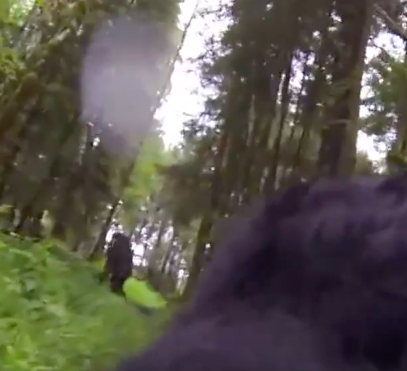 Screen Shot 2016 08 18 at 14.06.34 Did This Dog With GoPro Strapped On Its Back Find Bigfoot?
