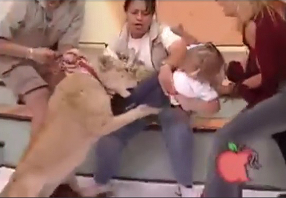 Crazy Video Shows Moment Lion Grabs Child On Live TV Show