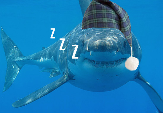 shark1 Someone Filmed A Great White Shark Sleeping For First Time