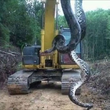 nintchdbpict000269676847 Workmen Find Largest Snake On Earth And Its Terrifying