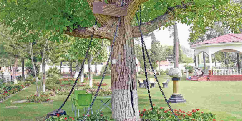 tree4 Meet The Worlds Oldest Prisoner Living In Chains For 118 Years