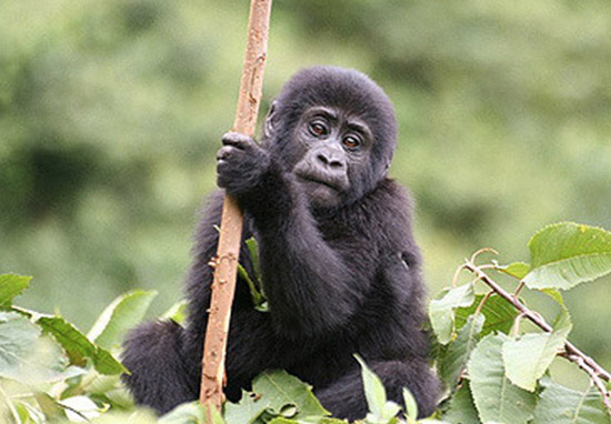 Zoo Competition To Name Gorilla Ends Exactly As You'd Expect