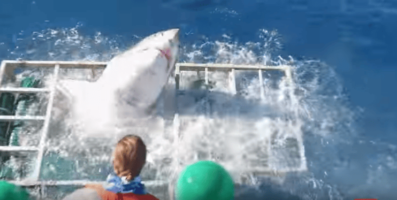 Shocking Moment Great White Shark Bursts Into Divers Cage 34885UNILAD imageoptim Shark